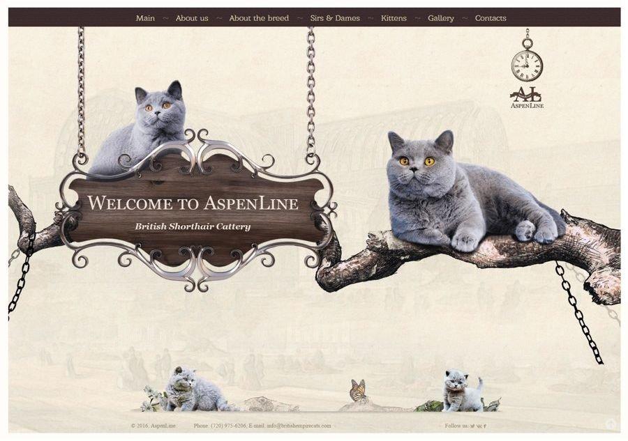 Создание сайта о кошках создания сайта в php